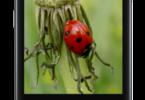 Adobe-Photoshop-ExpressPhoto-Editor-Collage-Maker-v6.1.592-Premium-APK-Free-Download-1-OceanofAPK.com_.png