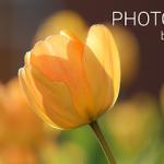 Photo Editor v5.3 Unlocked – Android Mesh