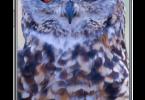 Adobe-Photoshop-ExpressPhoto-Editor-Collage-Maker-v6.4.597-Premium-APK-Free-Download-1-OceanofAPK.com_.png