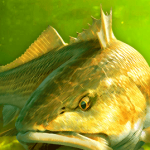 My Fishing World – Realistic fishing – VER. 1.11.89 (Free Gold