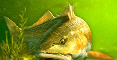 My Fishing World - Realistic fishing - VER. 1.11.89 (Free Gold